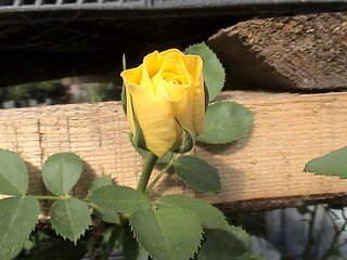 1152 X 864 487.7 Kb Продажа редких растений из питомника 'Мой сад'