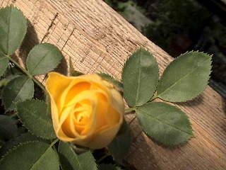 1152 X 864 375.5 Kb 1152 X 864 487.7 Kb Продажа редких растений из питомника 'Мой сад'