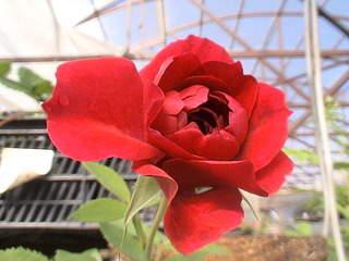1152 X 864 471.6 Kb 1152 X 864 490.2 Kb 1152 X 864 375.5 Kb 1152 X 864 487.7 Kb Продажа редких растений из питомника 'Мой сад'