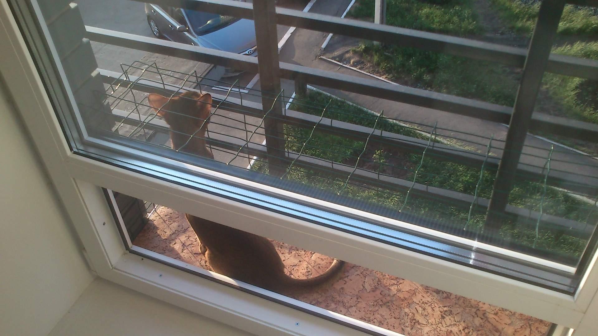Выгул на окно, прочная сетка, антикошка : звери. объявления.