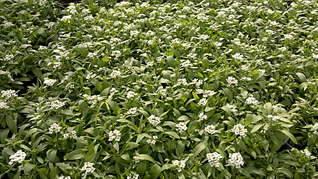1920 X 1079 388.0 Kb 1920 X 1079 409.6 Kb 1920 X 1079 363.5 Kb Продам рассаду сортовых петуний и других однолеток из профессиональных семян.