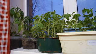 1920 X 1078 199.5 Kb 1920 X 1078 217.9 Kb принимаю заявки на рассаду - овощи, цветы, ягоды. Навоз, перегной