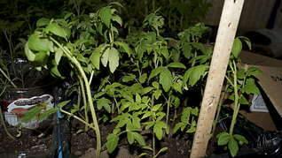 1920 X 1078 254.9 Kb принимаю заявки на рассаду - овощи, цветы, ягоды. Навоз, перегной