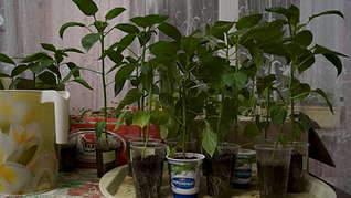 1920 X 1078 207.2 Kb 1920 X 1078 254.9 Kb принимаю заявки на рассаду - овощи, цветы, ягоды. Навоз, перегной