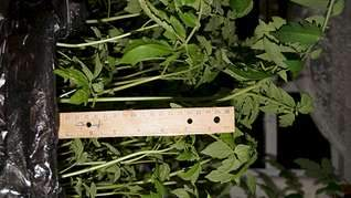 1920 X 1079 213.3 Kb 1920 X 1079 193.0 Kb принимаю заявки на рассаду - овощи, цветы, ягоды. Навоз, перегной