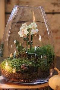 333 X 500 33.4 Kb 'Сад в стекле'. Композиции из растений.
