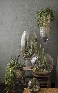 640 X 1024 129.0 Kb 333 X 500 33.4 Kb 'Сад в стекле'. Композиции из растений.