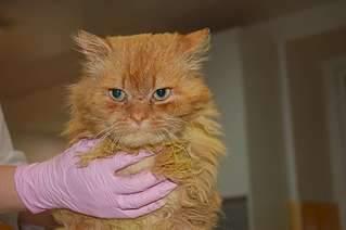 1920 X 1273 160.6 Kb Кошки в стационаре Ветсервиса. Нужна материальная помощь!