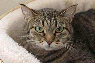 1920 X 1280 169.6 Kb Передержка для животных Пес Барбос отдает животных и пока не принимает кошек!