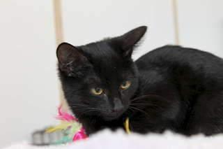 1920 X 1280  90.2 Kb 1920 X 1280 169.6 Kb Передержка для животных Пес Барбос отдает животных и пока не принимает кошек!
