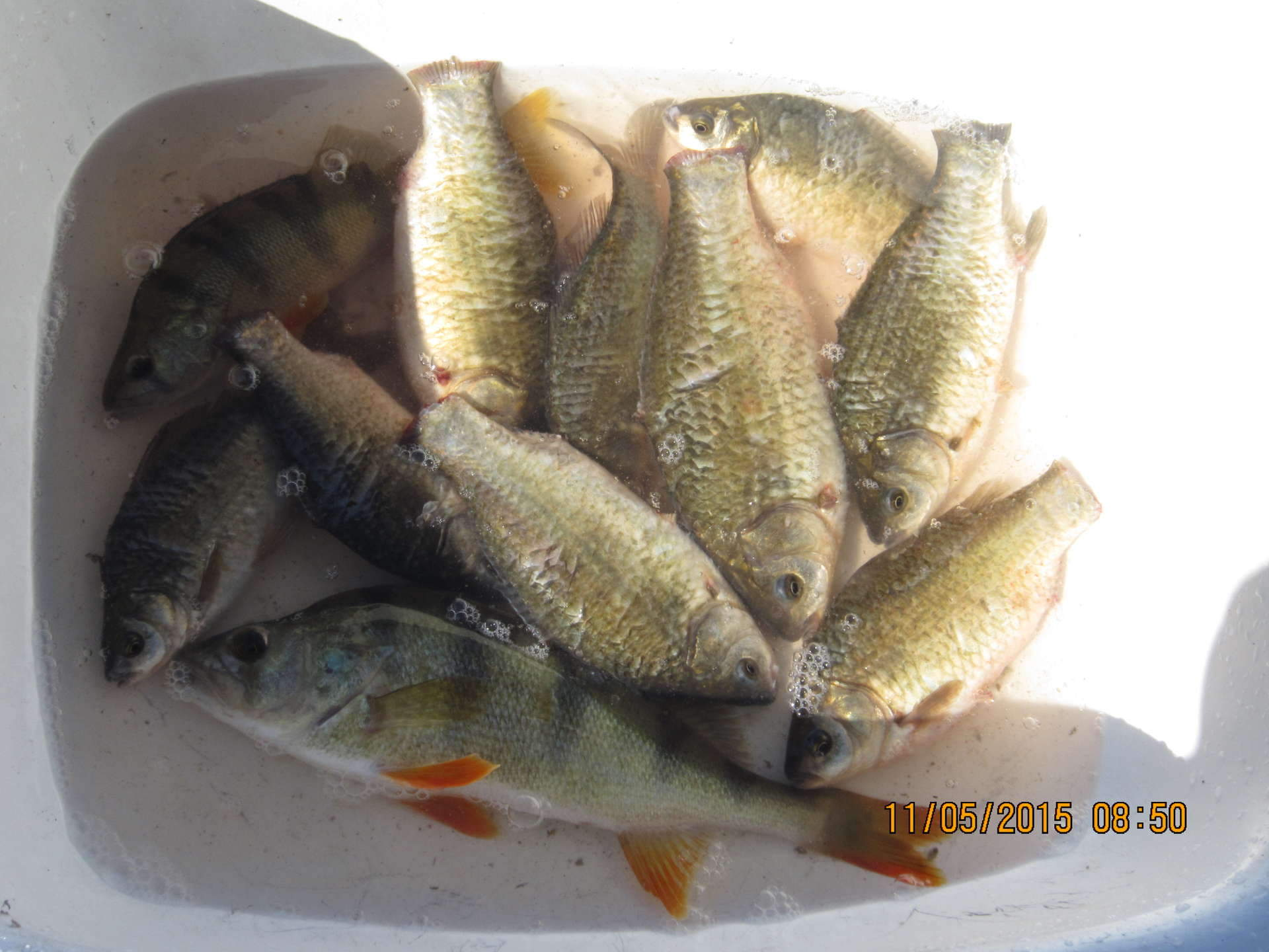 клюет ли рыба после обеда