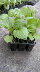 1920 X 3416 444.6 Kb 1920 X 1079 237.3 Kb Продам рассаду сортовых петуний и других однолеток из профессиональных семян.