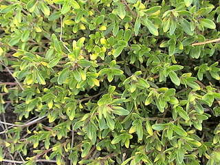 1152 X 864 452.9 Kb 1152 X 864 454.6 Kb Продажа редких растений из питомника 'Мой сад'