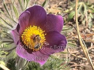1152 X 864 204.4 Kb Продажа редких растений из питомника 'Мой сад'