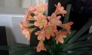 604 X 362  38.1 Kb 604 X 362  36.1 Kb Помогите определить цветок