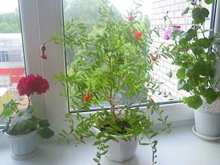 2048 X 1536 660.3 Kb Плодовые комнатные растения