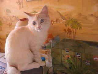 1920 X 1440 179.5 Kb Мишель, моя кошка