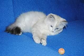 1280 X 859 243.6 Kb Мишель, моя кошка. Кошка-Симошка.