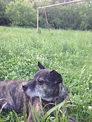 720 X 960 234.9 Kb Боря, сбитая собака, Авангардная, скорее всего не будет видеть
