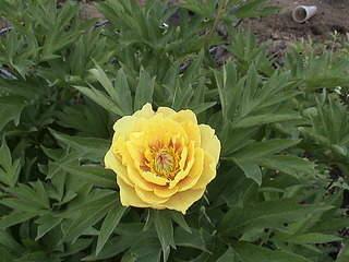 1152 X 864 386.0 Kb Продажа редких растений из питомника 'Мой сад'