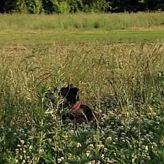 1920 X 1920 306.9 Kb Боря, сбитая собака, Авангардная, скорее всего не будет видеть