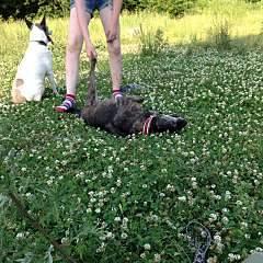 1920 X 1920 569.8 Kb 1920 X 1920 306.9 Kb Боря, сбитая собака, Авангардная, скорее всего не будет видеть