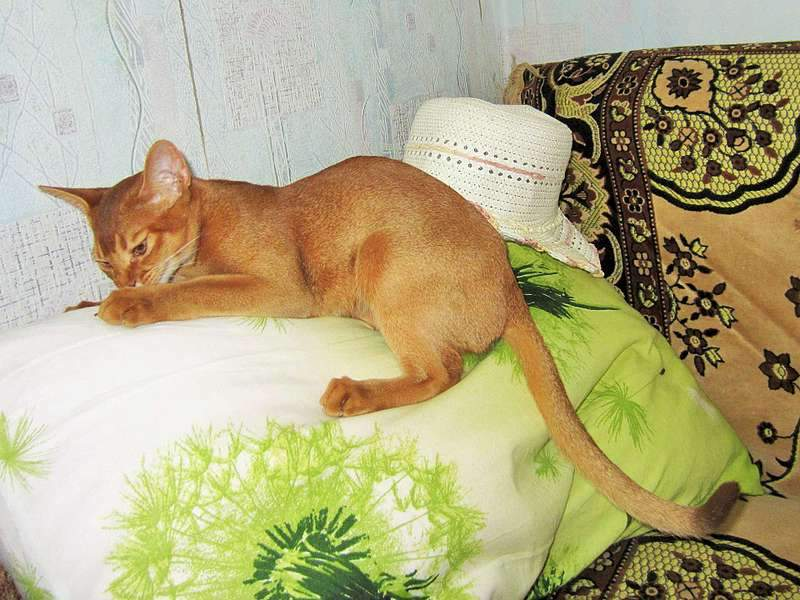 1920 X 1440 318.1 Kb Веточка для Коржиков и абиссинских кошек