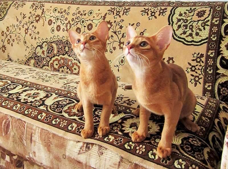 1920 X 1419 425.5 Kb 1920 X 2241 452.7 Kb 1920 X 1440 318.1 Kb Веточка для Коржиков и абиссинских кошек
