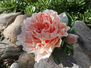 1920 X 1440 285.3 Kb 1920 X 1440 203.3 Kb 1920 X 1440 200.4 Kb Реалистичные цветы из фоамирана.Подарки и украшения ручной работы из фоамирана