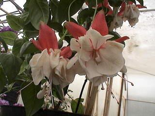 1152 X 864 497.0 Kb Продажа редких растений из питомника 'Мой сад'
