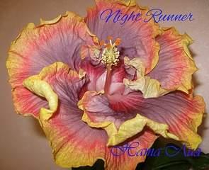 1870 X 1518 785.8 Kb ГИБИСКУС, или Китайская роза