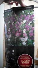 1872 X 3328 604.2 Kb Продажа редких растений из питомника 'Мой сад'