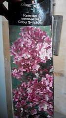 1872 X 3328 684.8 Kb 1872 X 3328 562.8 Kb 1872 X 3328 690.8 Kb 1872 X 3328 604.2 Kb Продажа редких растений из питомника 'Мой сад'