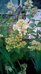 1872 X 3328 853.8 Kb 1872 X 3328 684.8 Kb 1872 X 3328 562.8 Kb 1872 X 3328 690.8 Kb 1872 X 3328 604.2 Kb Продажа редких растений из питомника 'Мой сад'