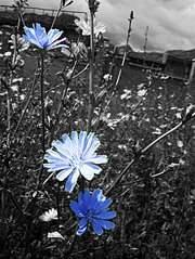 453 X 604  78.0 Kb Цветочки.