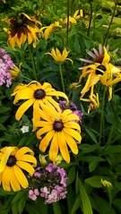 1836 X 3264 663.3 Kb Цветы