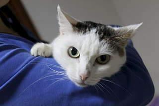1920 X 1280 132.6 Kb Передержка для животных Пес Барбос отдает животных и пока не принимает кошек!