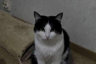 1920 X 1280 102.5 Kb 1920 X 1280 132.6 Kb Передержка для животных Пес Барбос отдает животных и пока не принимает кошек!
