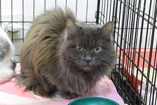 1920 X 1280 213.3 Kb 1920 X 1280 101.2 Kb 1920 X 1280 87.3 Kb Передержка для животных Пес Барбос отдает животных и пока не принимает кошек!
