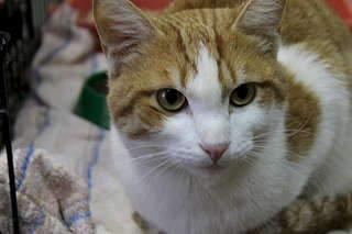 1920 X 1280 137.6 Kb Передержка для животных Пес Барбос отдает животных и пока не принимает кошек!