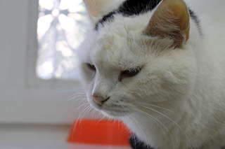1920 X 1280  96.4 Kb 1920 X 1280 137.6 Kb Передержка для животных Пес Барбос отдает животных и пока не принимает кошек!
