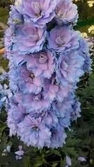 1836 X 3264 604.6 Kb Цветы