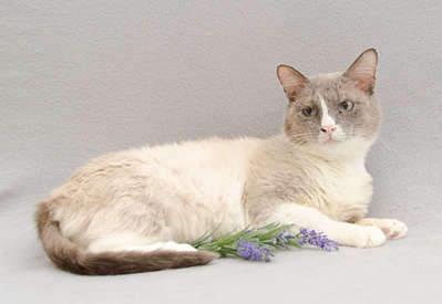 1920 X 1321 167.6 Kb Передержка для животных Пес Барбос отдает животных и пока не принимает кошек!