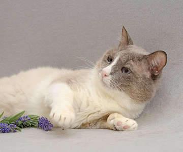 1920 X 1600 224.0 Kb 1920 X 1321 167.6 Kb Передержка для животных Пес Барбос отдает животных и пока не принимает кошек!