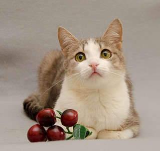 1920 X 1801 267.7 Kb 1920 X 1176 124.6 Kb Передержка для животных Пес Барбос отдает животных и пока не принимает кошек!
