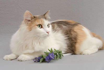 1920 X 1281 173.3 Kb Передержка для животных Пес Барбос отдает животных и пока не принимает кошек!