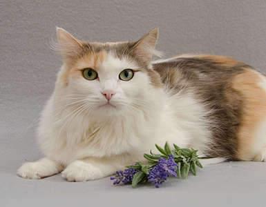 1920 X 1494 226.7 Kb 1920 X 1281 173.3 Kb Передержка для животных Пес Барбос отдает животных и пока не принимает кошек!