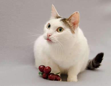 1920 X 1479 123.0 Kb Передержка для животных Пес Барбос отдает животных и пока не принимает кошек!
