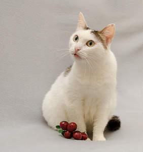 1885 X 2000 227.7 Kb 1920 X 1479 123.0 Kb Передержка для животных Пес Барбос отдает животных и пока не принимает кошек!