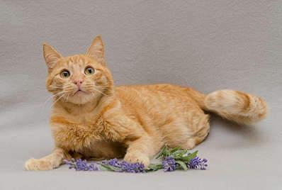 1920 X 1289 190.7 Kb Передержка для животных Пес Барбос отдает животных и пока не принимает кошек!